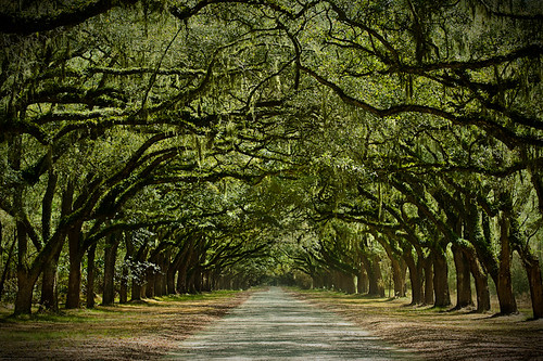 Savannah, Georgia Wormsloe Plantation | by mpflies2
