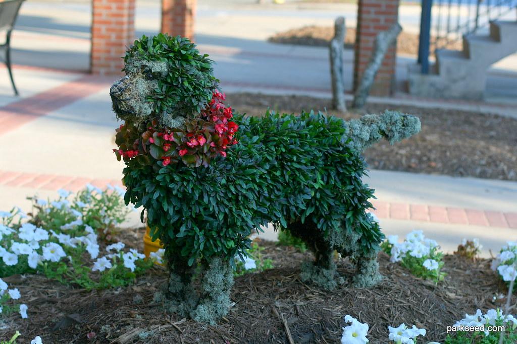 Labrador Topiary Harley Labrador Retriever Sponsored By