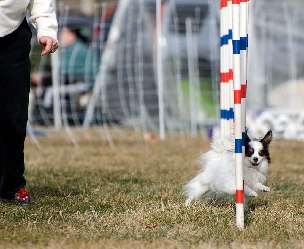 Dog Training Terms Heel