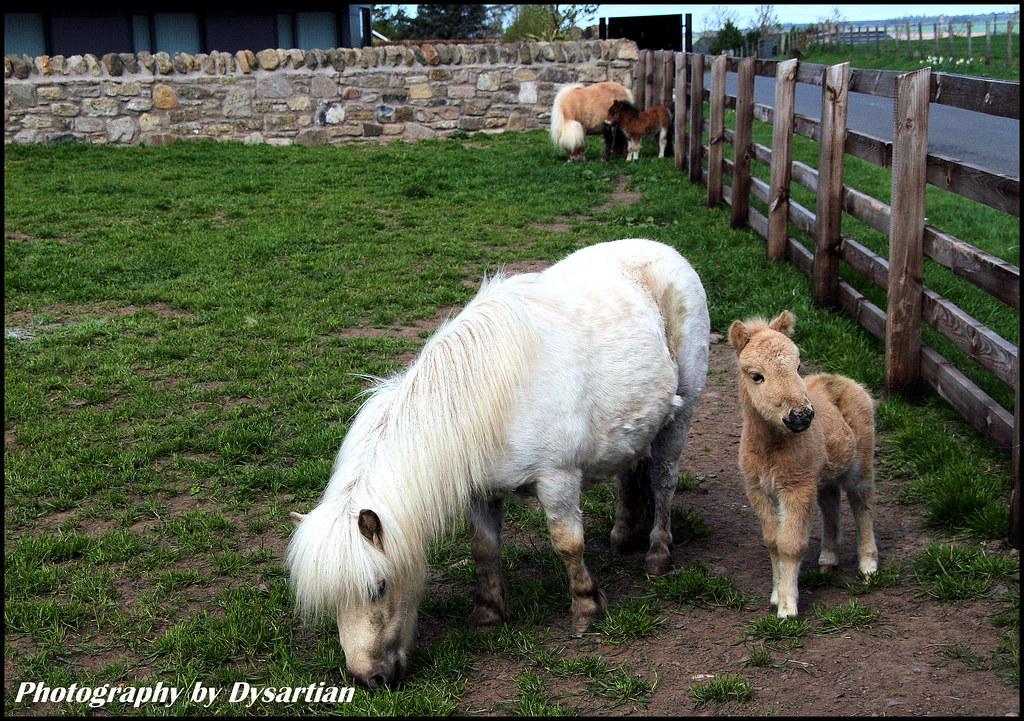 R Goats My Little Pony Lives -...
