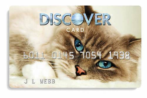 Cat Design Credit Card: Talouse | by Discover Card