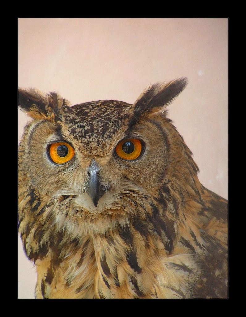 ullu ka patha eagle owl explored 278 on saturday