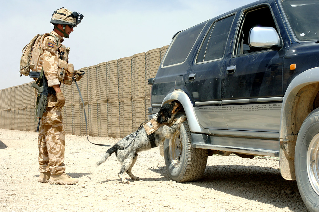 A British Army Corporal Guides His Dog 'Hudson' During A S