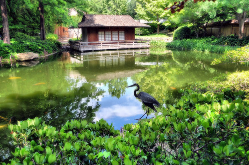 Japanese garden fort worth texas lake pond tea house ibis for Japanese pond plants