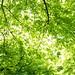 Green leaf ceiling