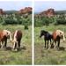 Rock Ledge Ranch Horses