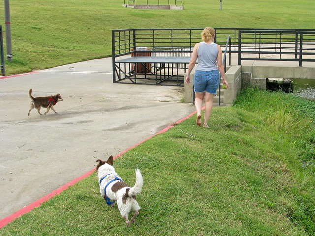 Image Result For Exercising Dogs In