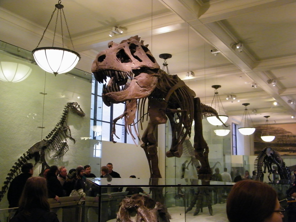 The American Museum Of Natural History Jobs