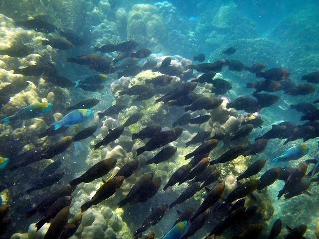 Thailand: Snorkeling Koh Phi Phi Island  Flickr - Photo ...