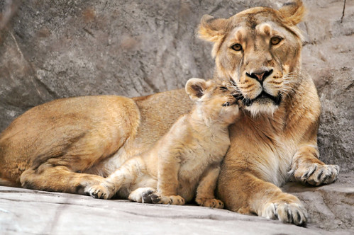 «I love you, mom!» | by Tambako the Jaguar