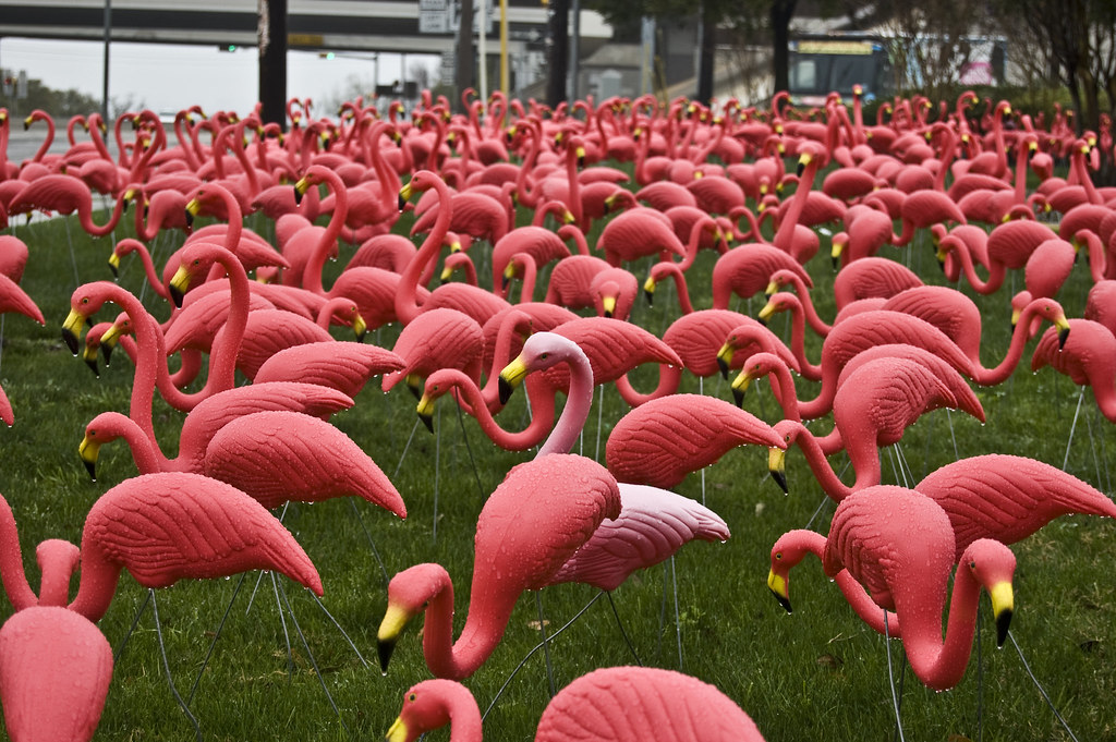 the pink flamingo essay Materialism coarsens and petrifies everything, making everything vulgar, and every truth false these profound quarrel spoken by swiss philosopher henri amiel illustrate the wretched everydayness and superficiality of the virus-like spread of materialism.