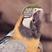 parrot, downtown disney - orlando FL