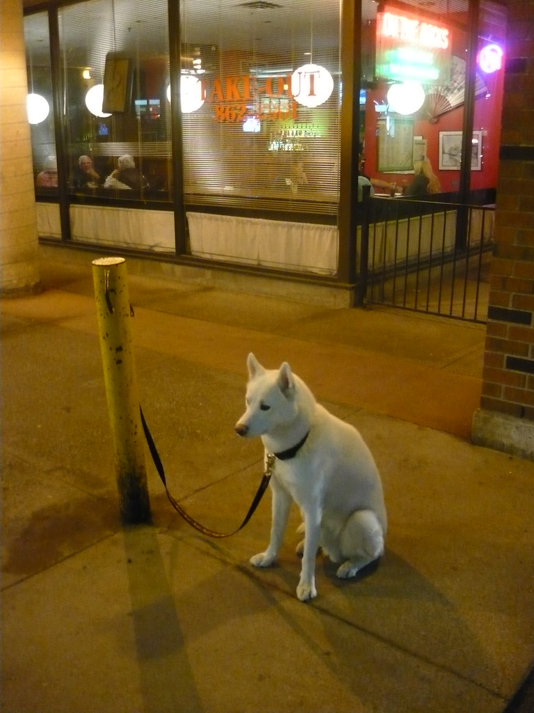 white dog tied outside of rabba, front street   Anthony ...