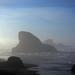 Leviathans Awake on the Oregon Coast