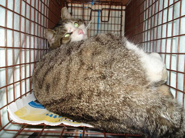 Tru Food Cat Pouches