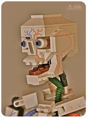 Lego Anatomy Skeleton: 3/4, Skull