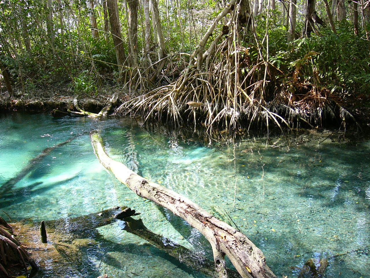 Celestun cenote