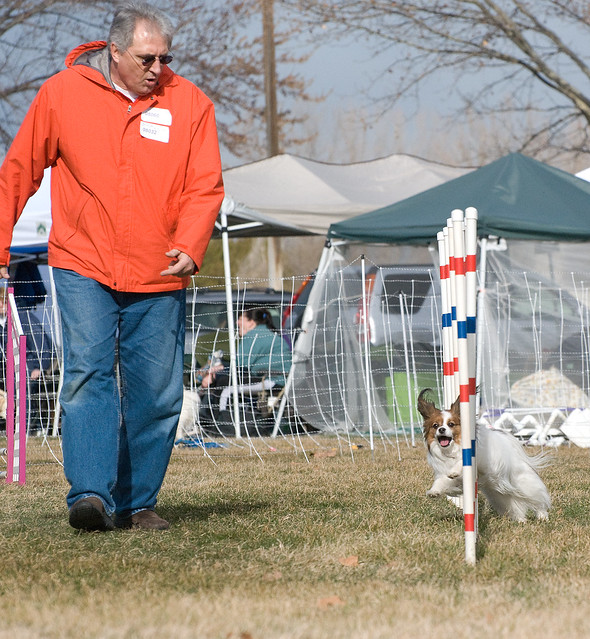 Critters Dog Training Doncaster