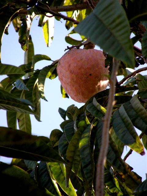 Frutas Vegetales Postres Comidas Flickr