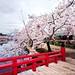 Sakura Bridge  (Hirosaki Japan). © Glenn Waters. (Explored). Over 16,000 visits to this photo. Thank you.