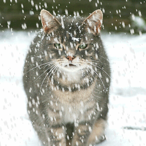 SNOW CAT [ animated ] | winter scene... made with jasc ...  |Winter Scenes With Cats