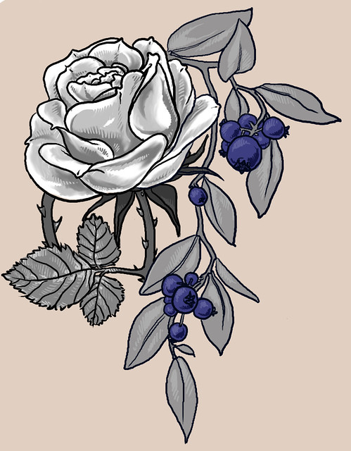 blueberry rose tattoo drawing the final sketch for a tatto flickr. Black Bedroom Furniture Sets. Home Design Ideas