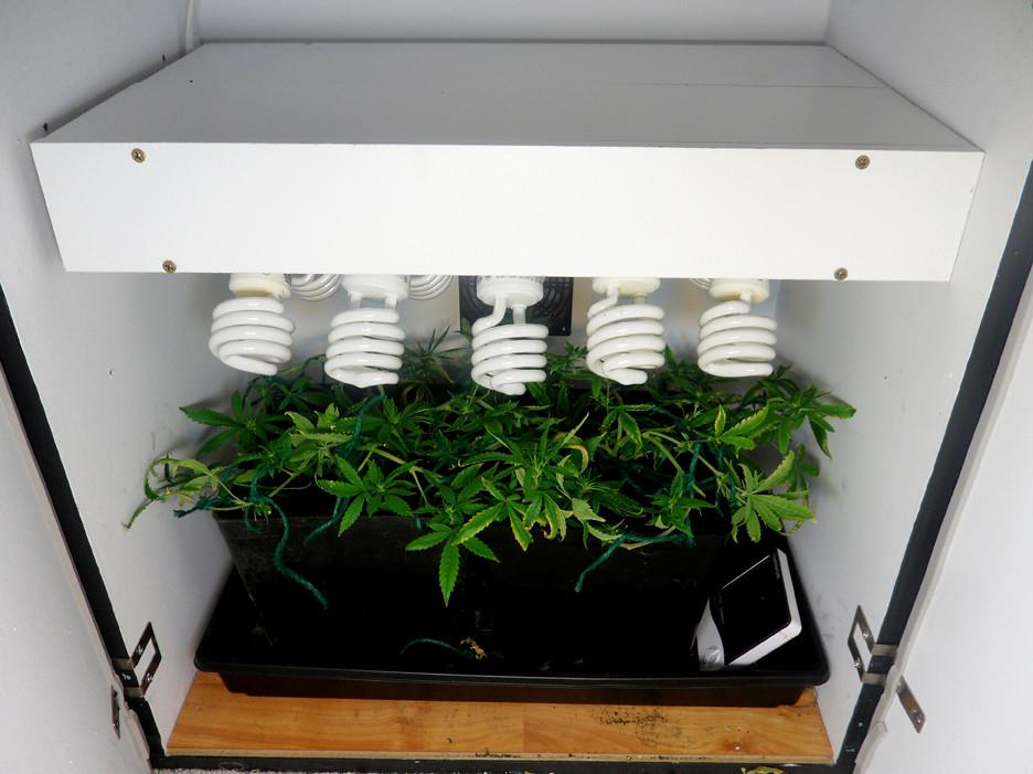 Освещение для выращивания канабиса 7