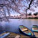 A lazy day. (Hirosaki Japan). © Glenn Waters. (Explored).  Over 10,000 visits to this photo.  Thank you.