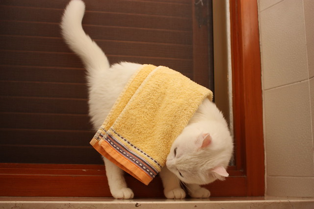 Happy Towel Day By Bianca the Cat 1