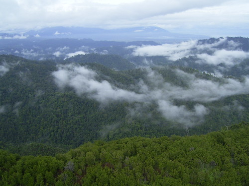 Seemingly endless forest | by East Asia & Pacific on the rise - Blog