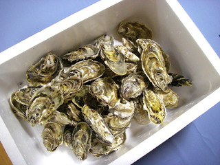 Oysters | by Blue Lotus
