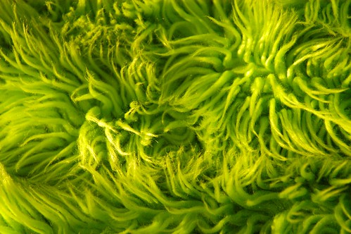 Lime Green Shag Rug Texture Flickr Photo Sharing