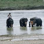 Chitwan NP / 2000 (53)