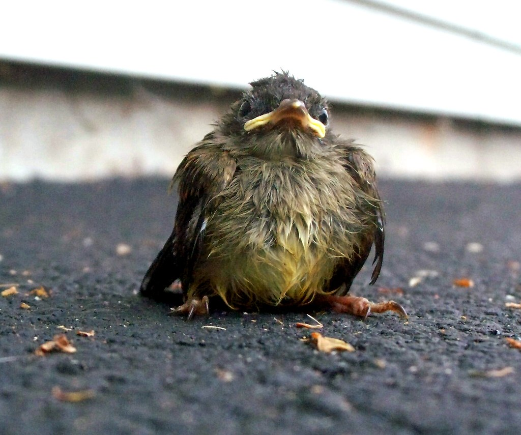 Image Result For Baby Birds With