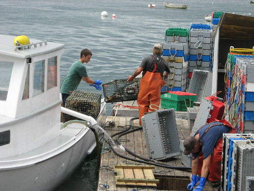 Lobstermen offload traps | by WNPR - Connecticut Public Radio