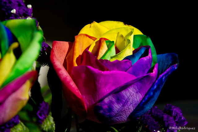 tie dye roses momday11 2 flickr photo