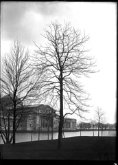 Northern catalpa tree outside Field Columbian Museum | by The Field Museum Library