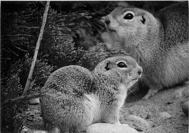 lab 1 lifescience 1 ground squirrels