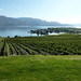 Kelowna Wine and Cuisine