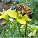 Sugando o mel - Feliz Quinta Flower, meus amigos!!!
