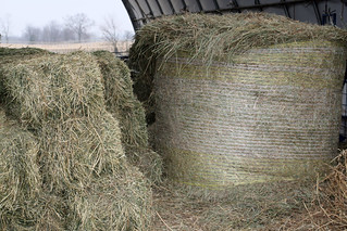 Diffferent kinds of hay | by baalands
