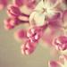 petit intermède floral