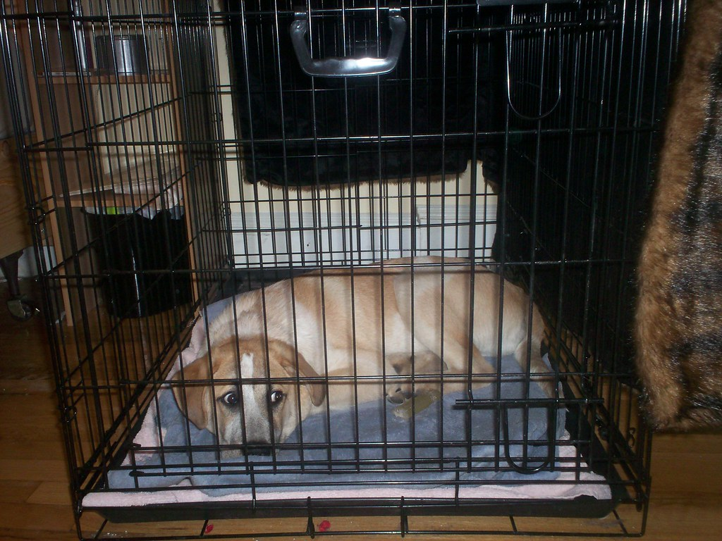 Dog resting in its crate