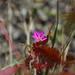 Wild Flowers - Picos de Europa