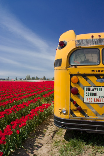 Old School Bus at the tulip fields | by Erico M.