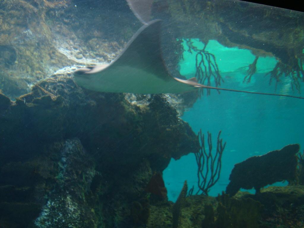 Stingray Taken At The New York Aquarium In Coney Island