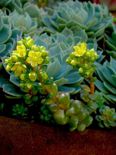 Zz Plant Flowers