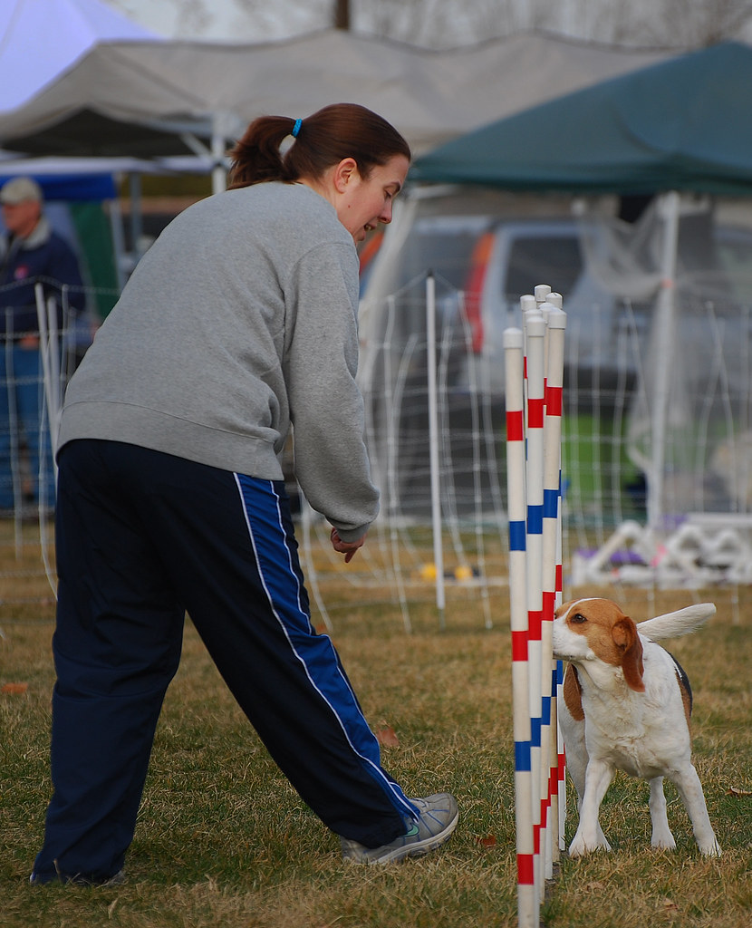 Image Result For Dog Agility Training