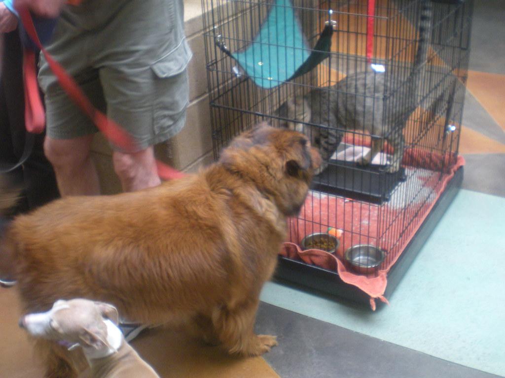 Cat Dog Shelter Edinburgh