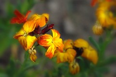 Wallflower | by mamietherese1